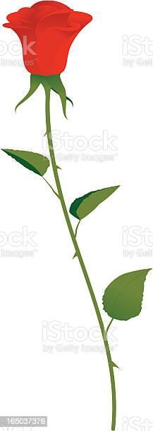 Single rose incl jpeg vector id165037376?b=1&k=6&m=165037376&s=612x612&h=wsjomdjd 1cjh4kumw56vxuuau2qve fbytd 0lf7cm=