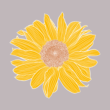 Single sunflower head digital drawing, yellow and terracotta with white outlines on gray background