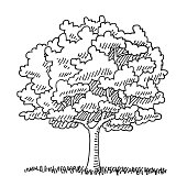 Hand-drawn vector drawing of a Single Tree in the Summer, Nature Symbol. Digital Drawing on a Boogie Board Sync. Black-and-White sketch on a transparent background (.eps-file). Included files are EPS (v10) and Hi-Res JPG.