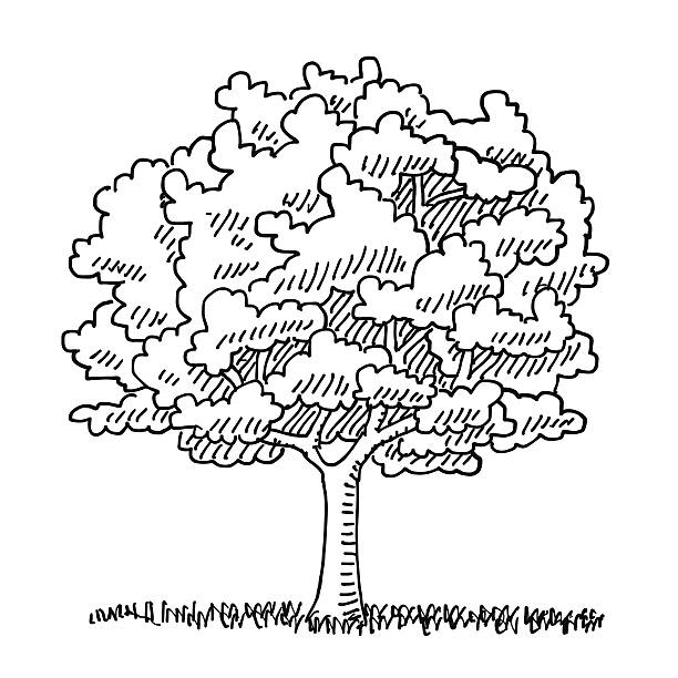 Single Tree Summer Nature Drawing Hand-drawn vector drawing of a Single Tree in the Summer, Nature Symbol. Digital Drawing on a Boogie Board Sync. Black-and-White sketch on a transparent background (.eps-file). Included files are EPS (v10) and Hi-Res JPG. environment stock illustrations