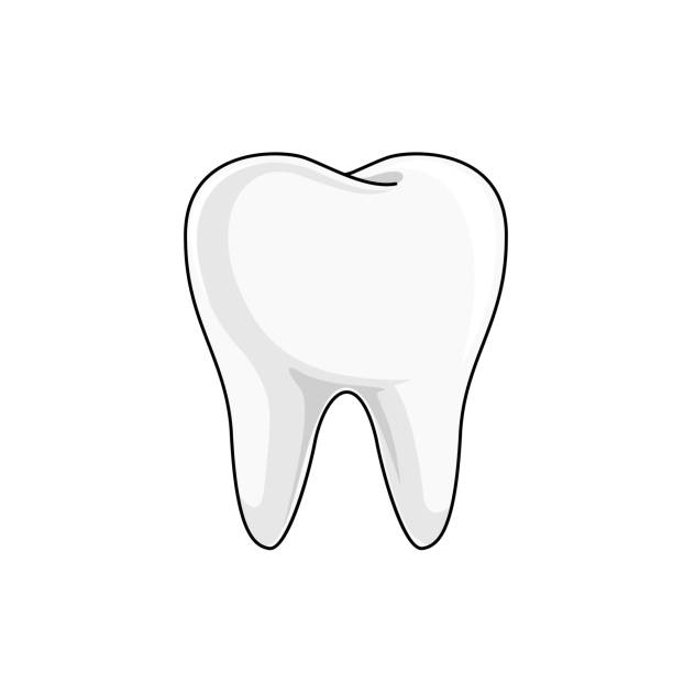 illustrazioni stock, clip art, cartoni animati e icone di tendenza di single white and healthy tooth. dental care concept. - denti