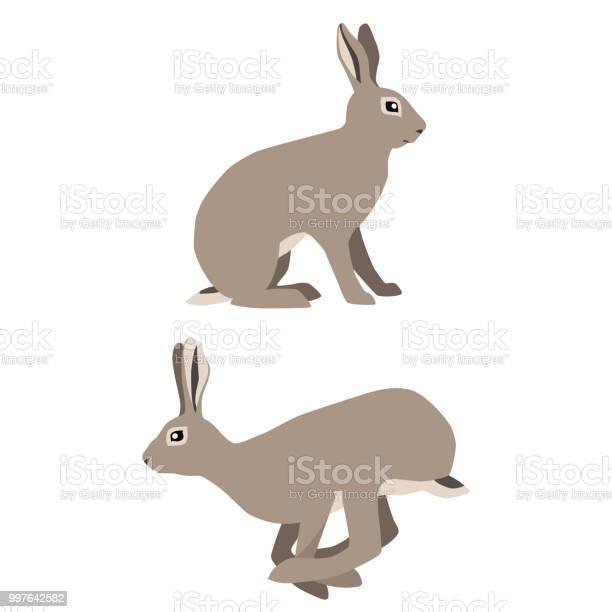 Sitting and jumping hares vector id997642582?b=1&k=6&m=997642582&s=612x612&h=gevj1ingyfblqudj lgbodahuvv6yfbrgbcjdqfwbcu=