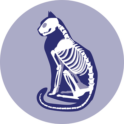 Sitting Cat Skeleton Stock Vector Art & More Images of ...