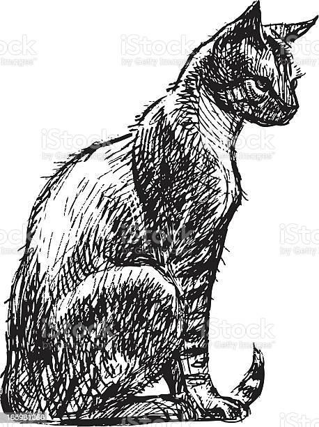 Sitting cat vector id165961066?b=1&k=6&m=165961066&s=612x612&h=49jzdcqwmcuplu rq6a zv9mnb7qjfdzj vreqg14be=