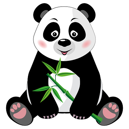 Sitting cute panda with bamboo isolated on white background
