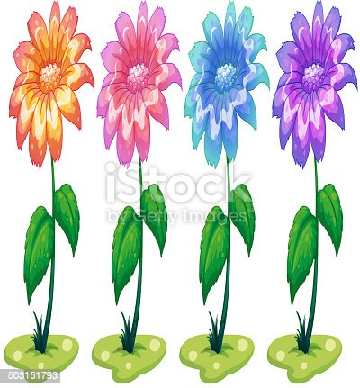 Illustration of the six colorful flowering plants on a white background