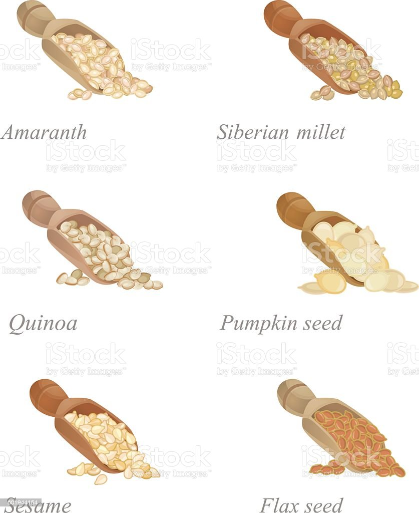 Six shovels with different cereals and oilseeds in them vector art illustration
