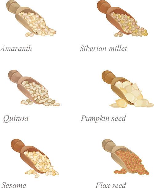 ilustrações de stock, clip art, desenhos animados e ícones de six shovels with different cereals and oilseeds in them - quinoa