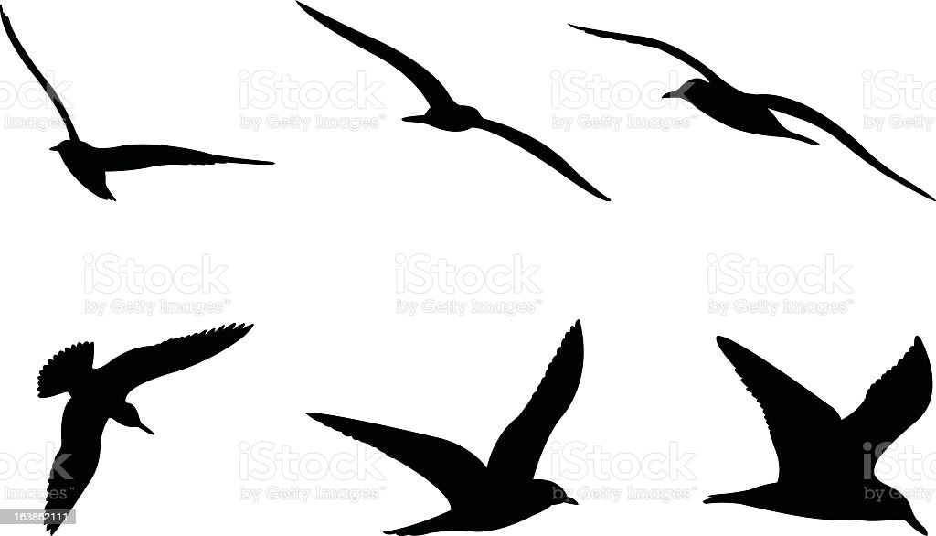 Six Silhouettes of a seagull in flight  vector art illustration