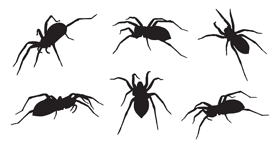 Six Spider Silhouettes