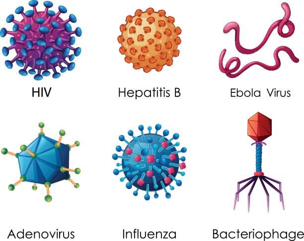 ilustrações, clipart, desenhos animados e ícones de seis tipos de vírus no fundo branco - hiv