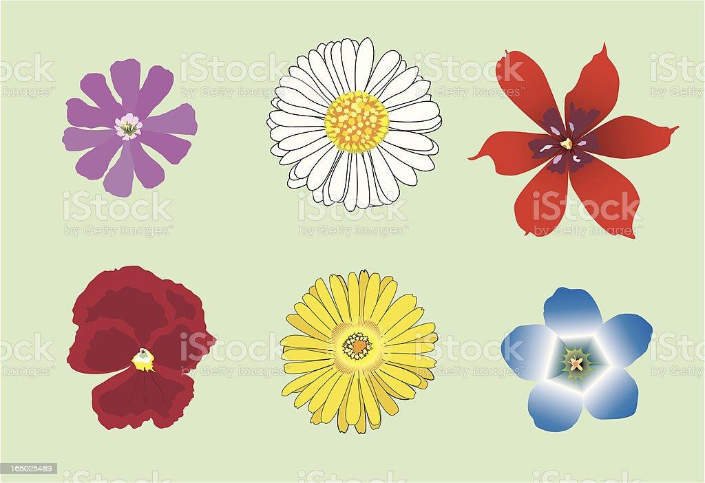 six vector flowers royalty-free stock vector art