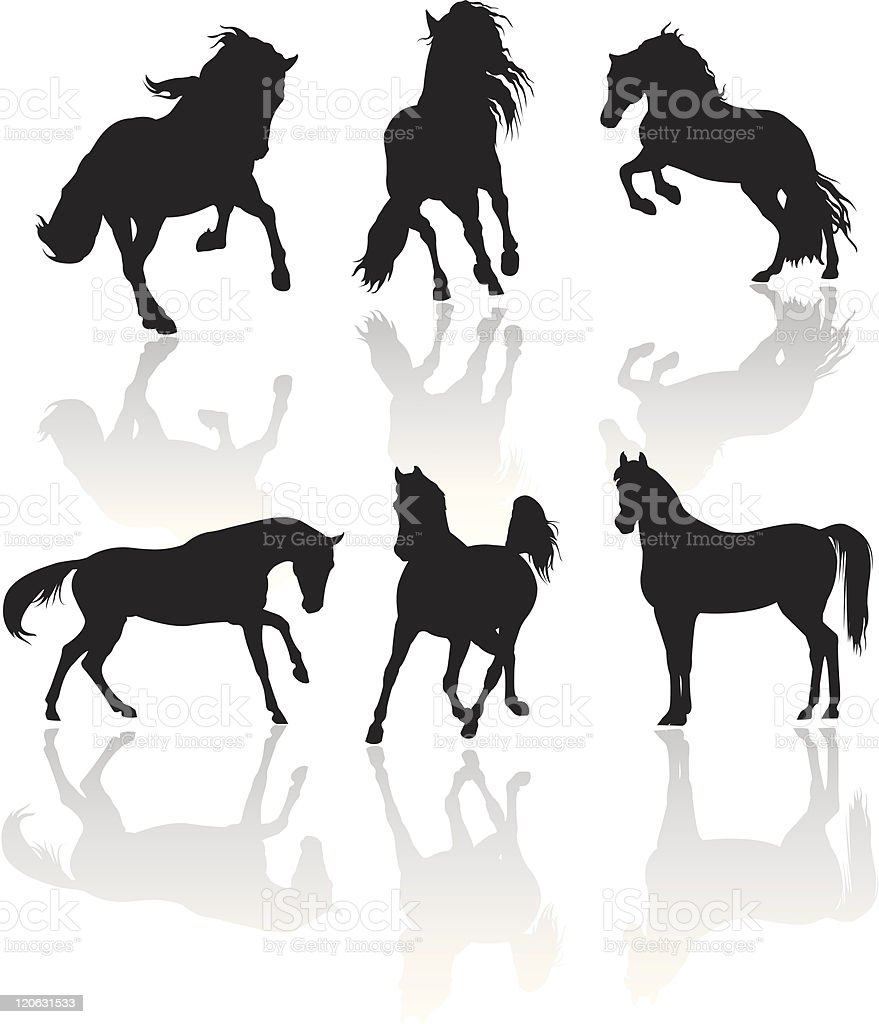 Six vector silhouettes of horses with shadows on white back vector art illustration