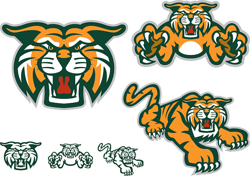 Six versions of a tiger mascot, three with orange coloring