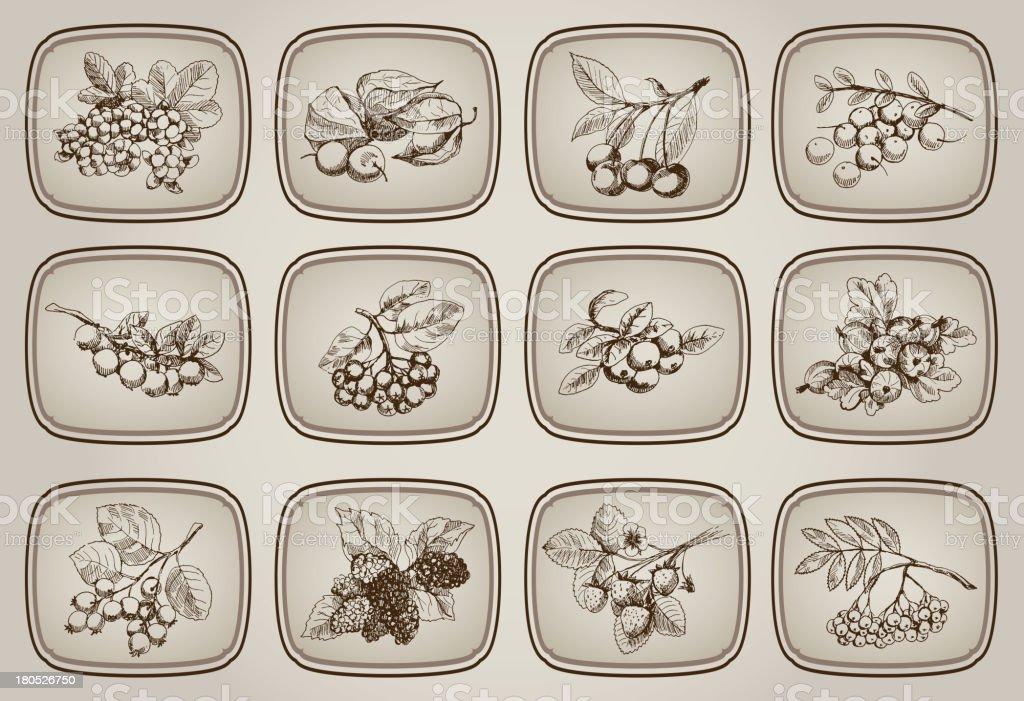 Juego de berry - ilustración de arte vectorial