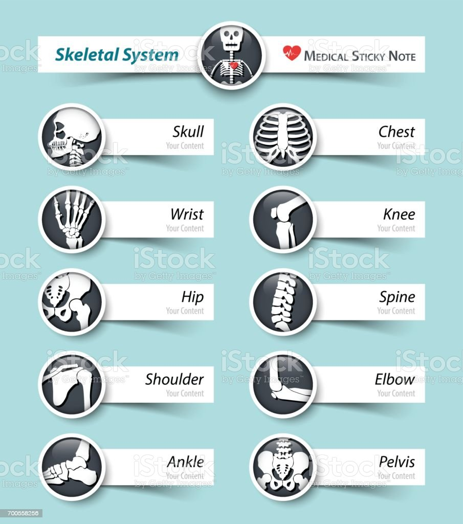 Skeletal System . Bone icon and sticky note . vector art illustration