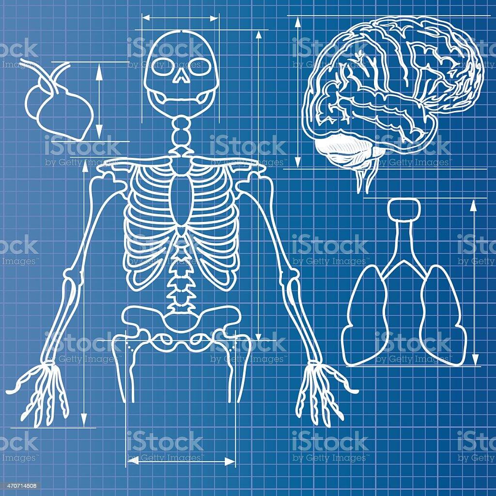 Skeleton blueprint stock vector art more images of 2015 470714508 skeleton blueprint royalty free skeleton blueprint stock vector art amp malvernweather Choice Image