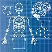 skeleton blueprint