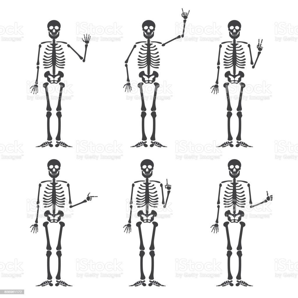 Conjunto De Gestos De Mano Esqueleto - Arte vectorial de stock y más ...