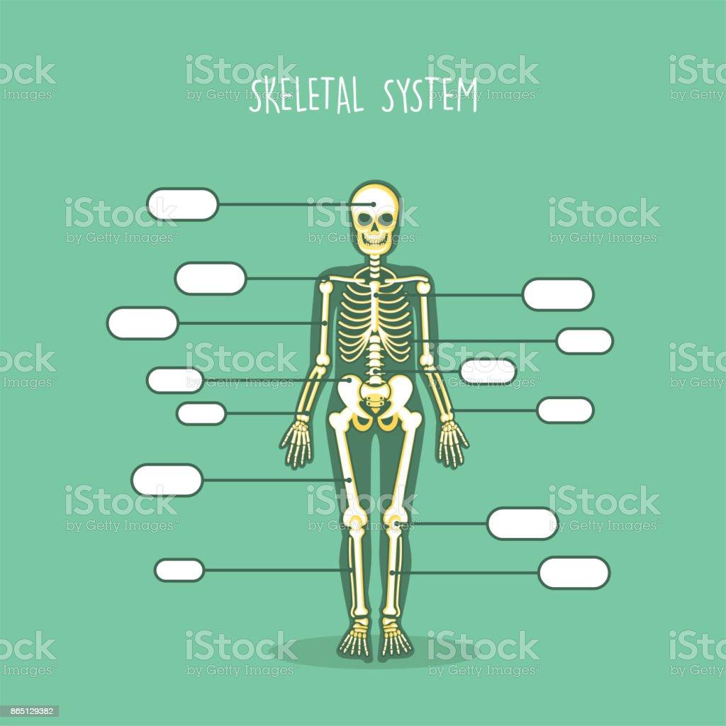 Ilustración de Anatomía Del Esqueleto Humano Huesos y más banco de ...