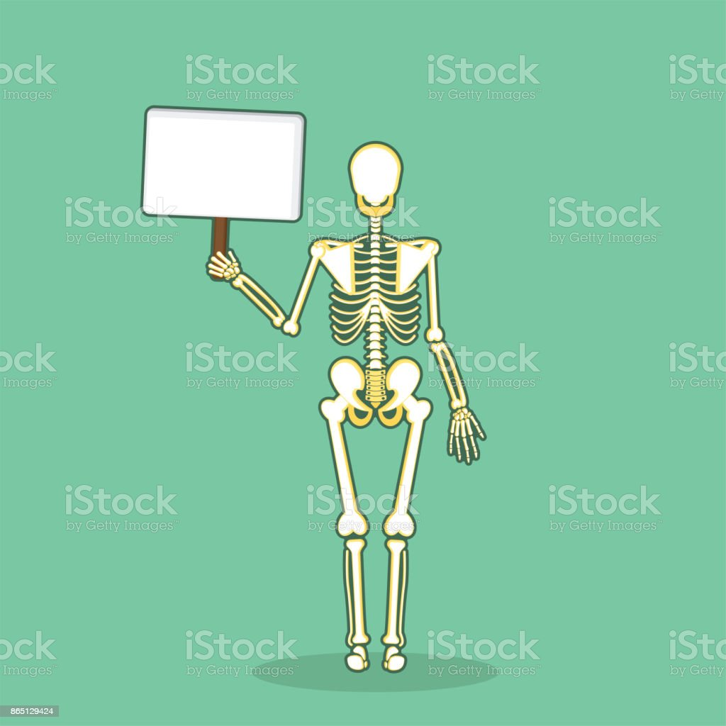 Skeleton Human Bones Anatomy Stock Vector Art More Images Of