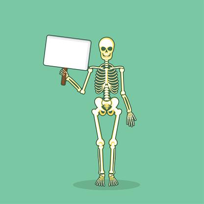 Skeleton Human Bones Anatomy