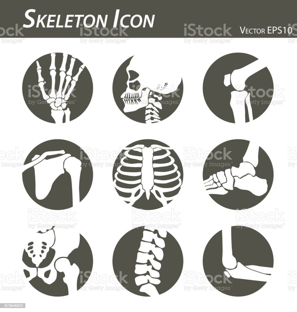 Skeleton icon (hand, finger , wrist , head , neck , thigh , knee , leg , shoulder , arm , forearm , thorax , ankle , foot , pelvis , hip , backbone ( vertebrae ) , elbow) black and white , flat design vector art illustration