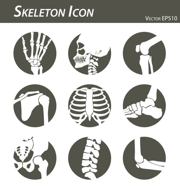 illustrazioni stock, clip art, cartoni animati e icone di tendenza di skeleton icon (hand, finger , wrist , head , neck , thigh , knee , leg , shoulder , arm , forearm , thorax , ankle , foot , pelvis , hip , backbone ( vertebrae ) , elbow) black and white , flat design - spalla giuntura