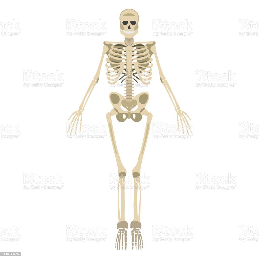 Wunderbar Skelett Spiele Anatomie Bilder - Anatomie Ideen - finotti.info