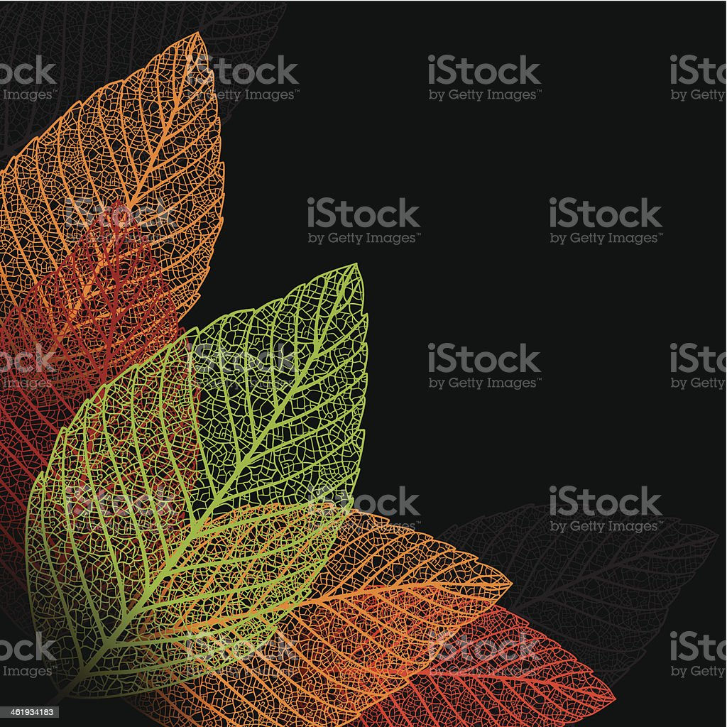 Skeleton leaf background. vector art illustration