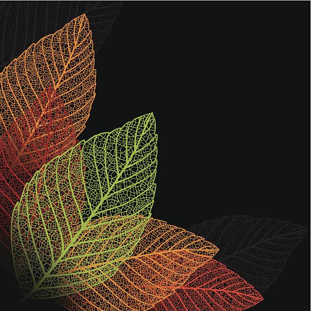 skeleton leaf background. - animal skeleton stock illustrations