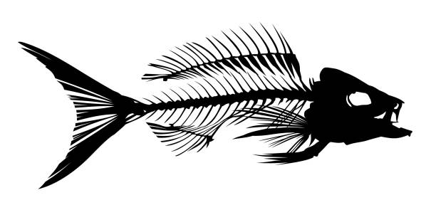 Best Fish Skeleton Illustrations, Royalty-Free Vector ...