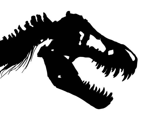 skeleton of tyrannosaurus rex ( t-rex ) ( skull and neck ) . vector - animal skeleton stock illustrations