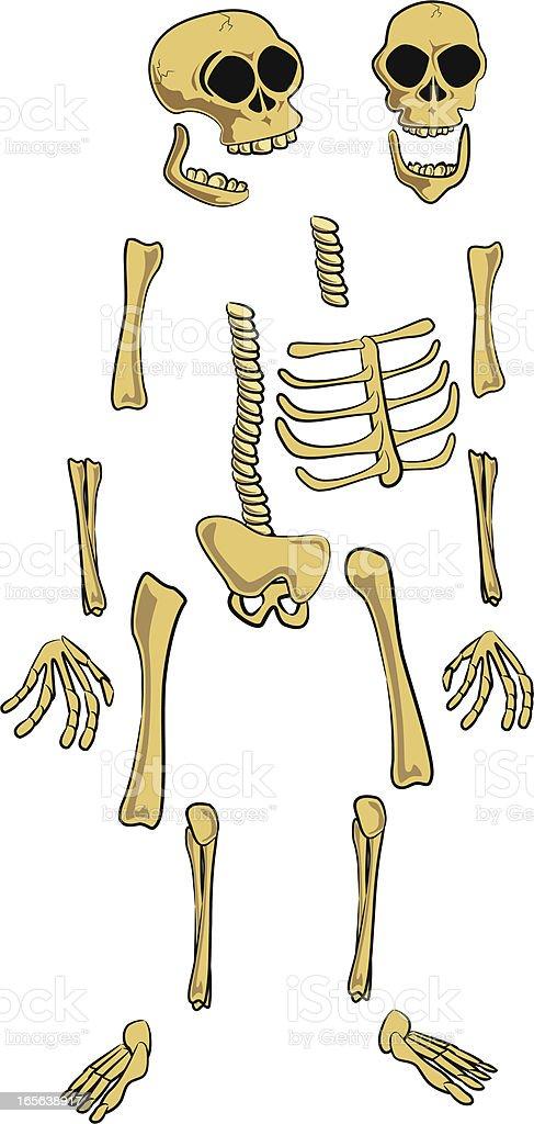 Skeleton parts cartoon - custom posing royalty-free stock vector art