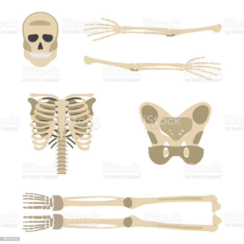 Skelettteilesymbol Menschliches Skelett Vorderseite Silhouette ...