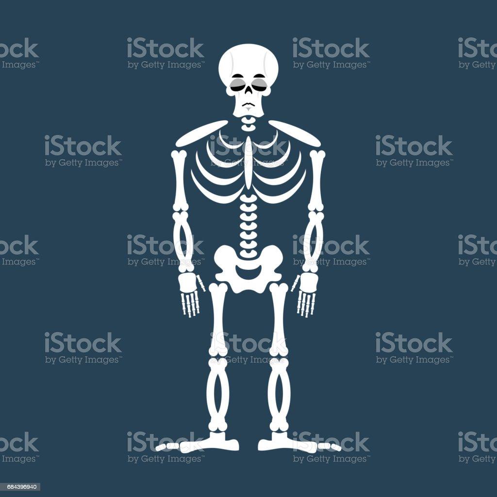 Fantastisch Menschliche Anatomie Und Physiologie Knochen Studie ...