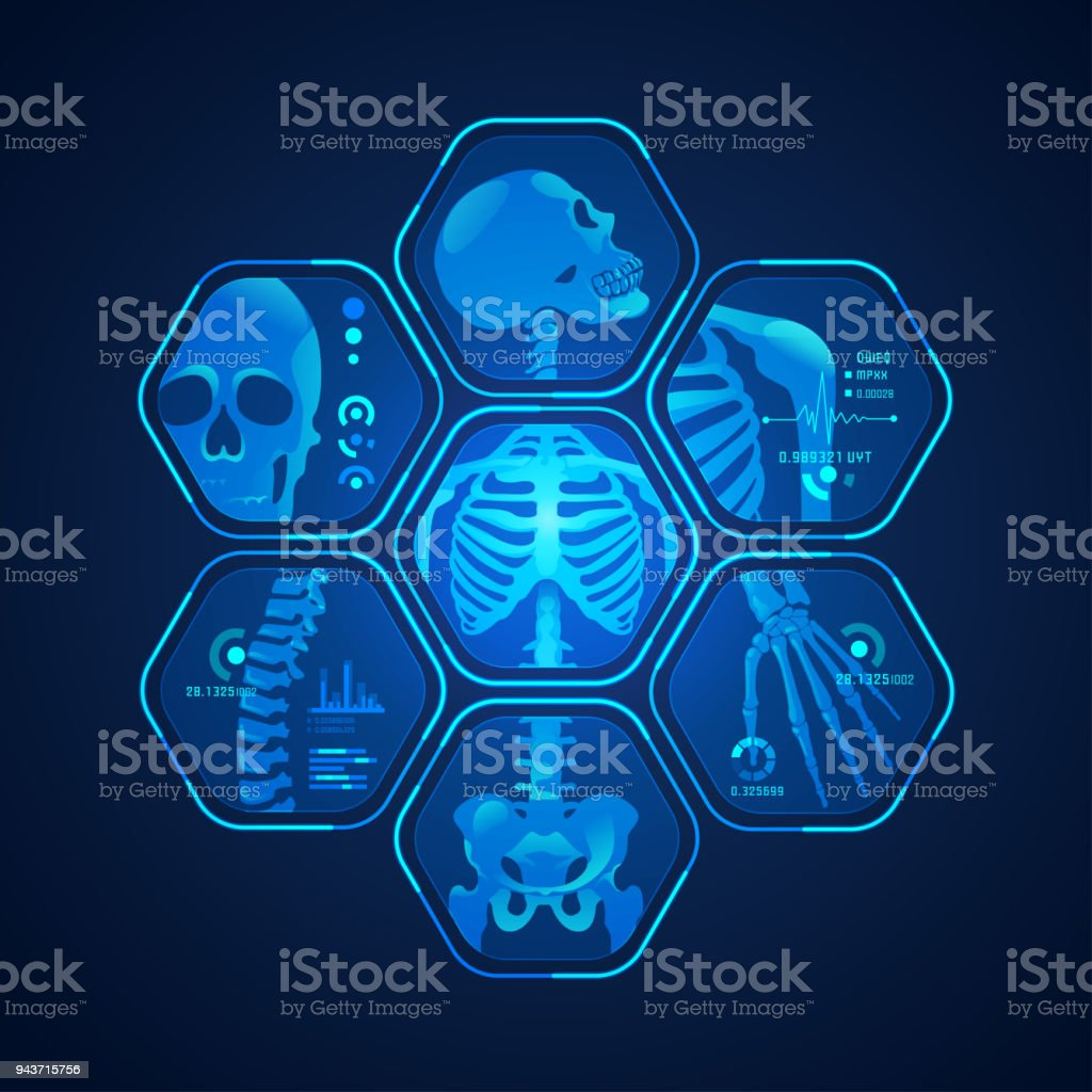 skeleton scan vector art illustration