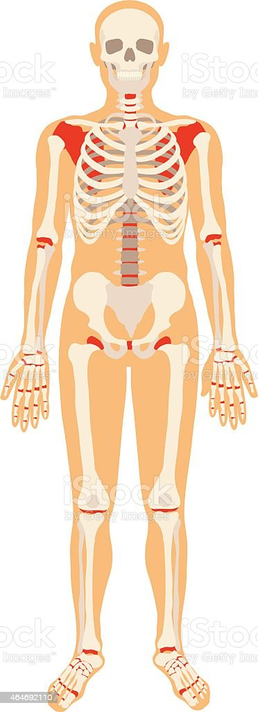 Skeleton. Vector flat illustration vector art illustration