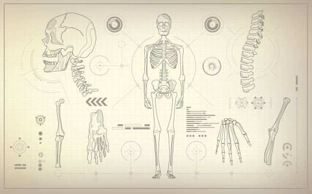 skeleton concept of health care technology, parts of skeleton in anatomical science chest torso stock illustrations