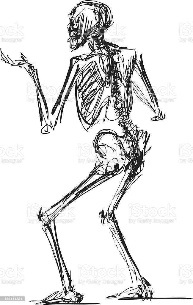 skeleton royalty-free skeleton stock vector art & more images of anatomy