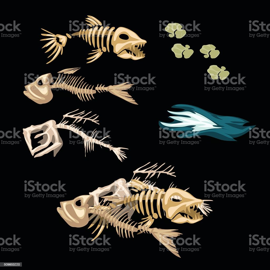 Skeletons Fish Track And Other Items Stock Vector Art & More Images ...