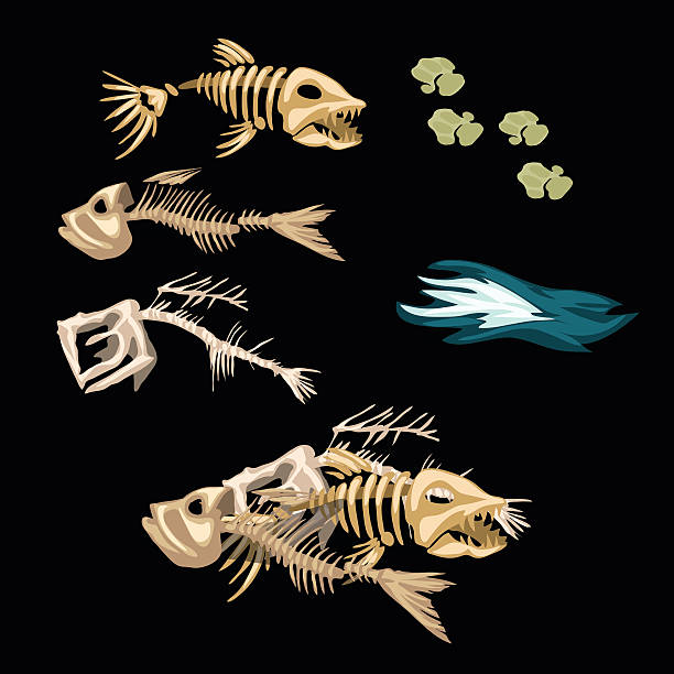 skeletons fish, track and other items - fish skeleton stock illustrations, clip art, cartoons, & icons