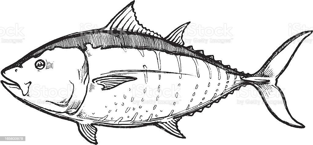 Sketch Blue Fin Tuna royalty-free stock vector art