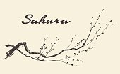 Sketch of branch of sakura with flowers. Vector illustration, engraved style