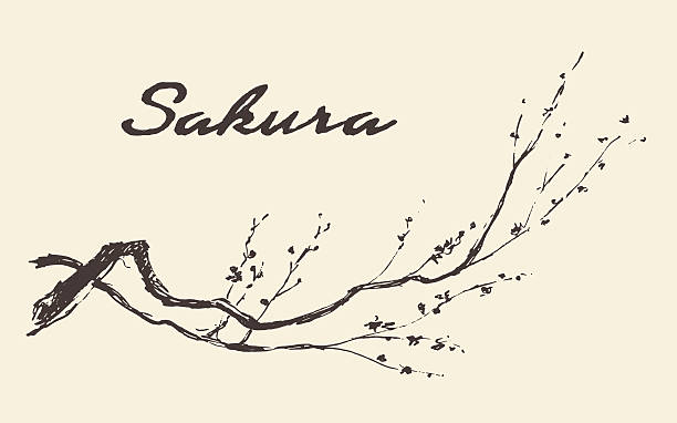 stockillustraties, clipart, cartoons en iconen met sketch branch sakura flowers vector illustration. - japanse etniciteit