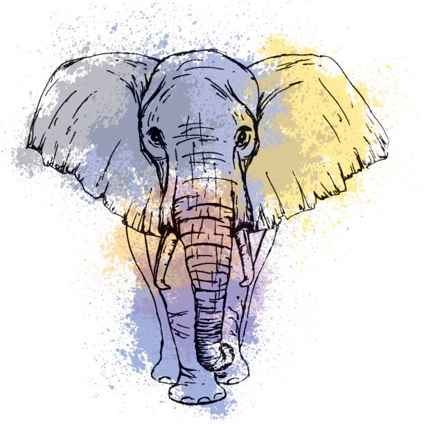 sketch by pen african elephant front view against the background of watercolor stains - elephant stock illustrations