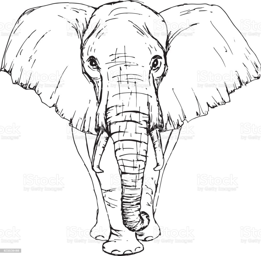 sketch by pen african elephant front view stock vector art
