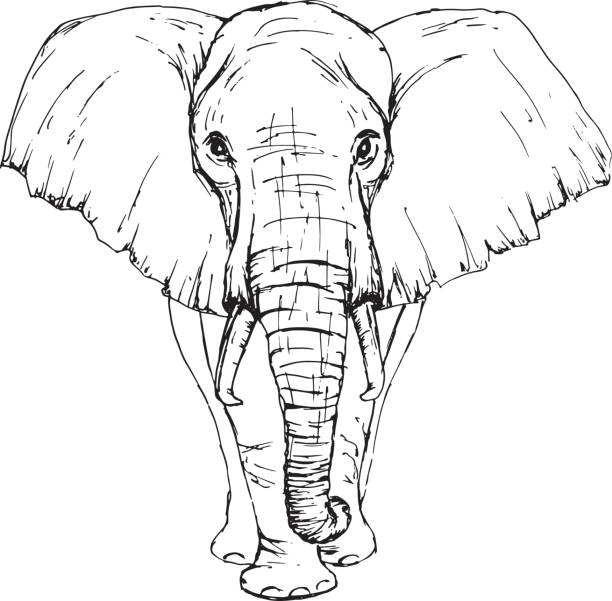Sketch by pen African elephant front view Sketch by pen African elephant front view elephant stock illustrations