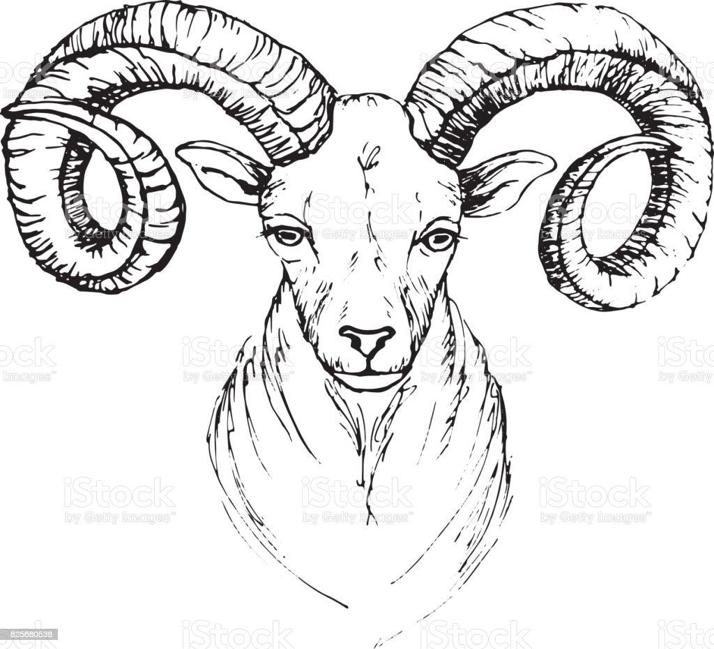 Dessin de tête de plume d'une chèvre de montagne avec des cornes qui tournoie - Illustration vectorielle