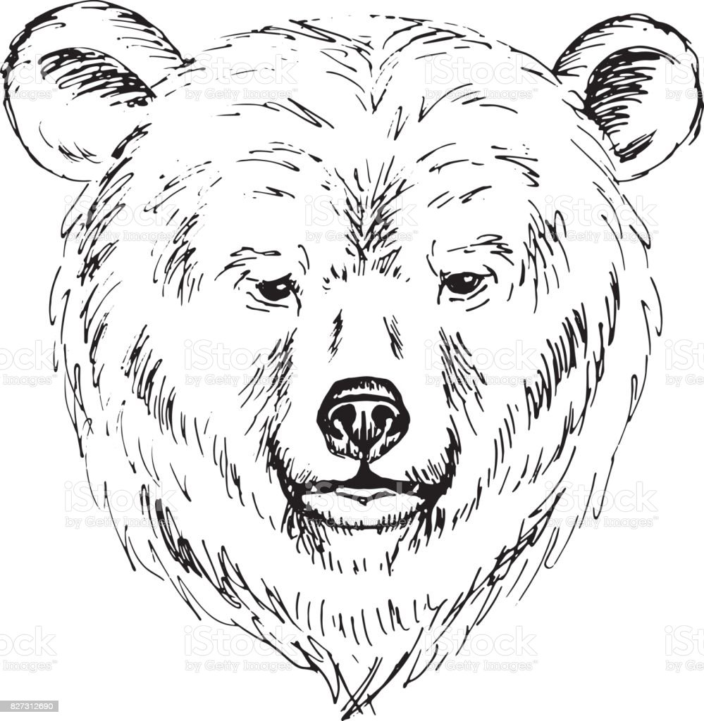 Royalty Free Grizzly Bear Face Clip Art, Vector Images ... Bear Face Drawing